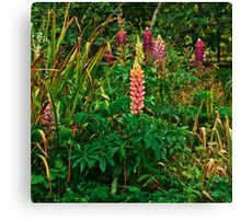 Lupins in the Pond Garden Canvas Print