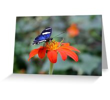 Butterfly & Flower Greeting Card