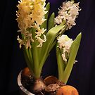 :)hyacinth boat by LisaBeth