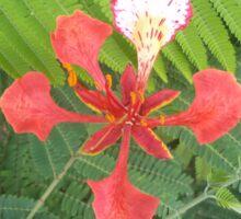 Flame Tree Blossom Sticker