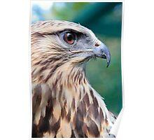 Rough Legged Hawk - Lake Placid New York Poster