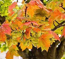 Turning Leaves by Lynne Morris