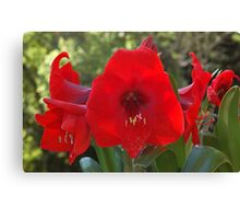Red Flowers of Love Canvas Print