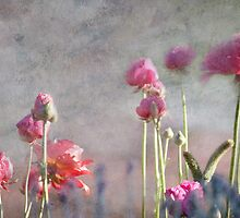 Fairy Floss and Whispers by Lynda Heins