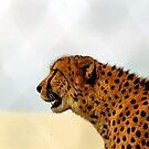 I See Spots! by SuddenJim