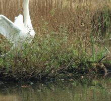 Swans at Stover Sticker