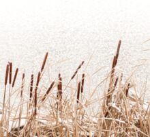 Snow on Typha reeds and frozen water  Sticker