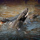 Dining out with the Alligators by TheBrit