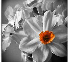 Tangerine by Catherine Restivo