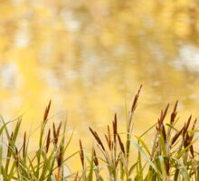 decorative reeds and yellow reflection  Sticker