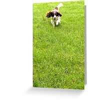 Alfie Walkies Greeting Card