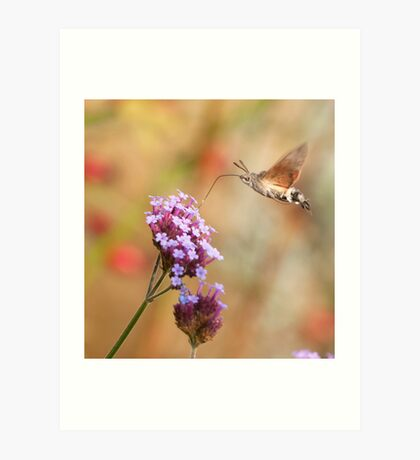 Hummingbird hawk-moth against a Flowery Background Art Print