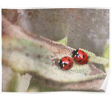 Ladybirds on sage Poster