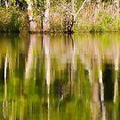 Reflection on Brice's Creek by NCBobD