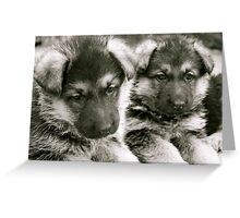 You And I (German Shepherd Puppies) Greeting Card