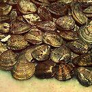 scallops fish shells mussels market  by anjafreak