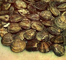 scallops fish shells mussels market  by anjafreak