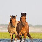 Wild Horses Crossing Tidal Flats by NCBobD