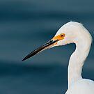 Snowy Egret Portrait by Michael Mill