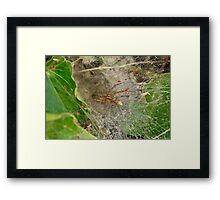 Spider and Web Framed Print