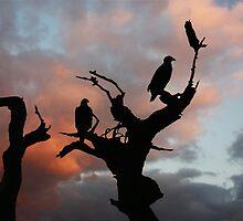BALD EAGLES AT SUNSET by TomBaumker