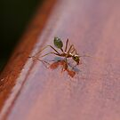 Green Ant ready to go ya! by Hege Nolan