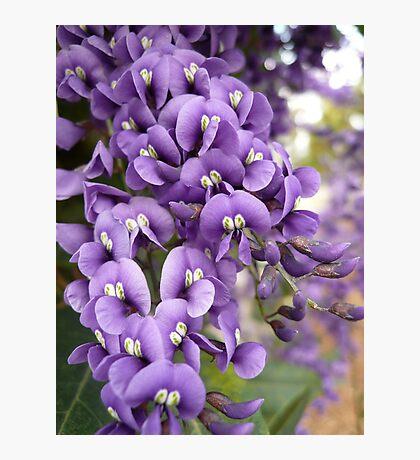 Australian Native Plants 11-20 Photographic Print