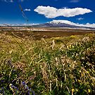 Ruapehu Meadow by morealtitude