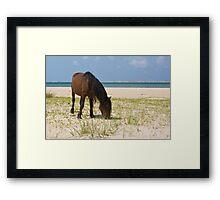 Wild Mustang on Shackleford Banks Beach Framed Print
