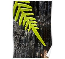 Fren on a Charred Log - Croatan National Forest Poster