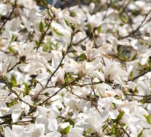 White Magnolia blooming bunch Sticker