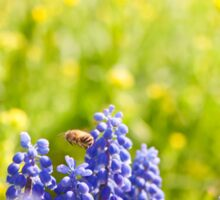 blue Muscari Mill flower Sticker