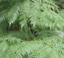 Beautiful forest tree fern Sticker