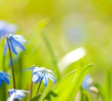 Scilla siberica flowerets wood squill Sticker