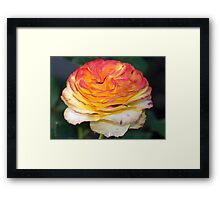 Not Just Another Tequila Sunrise Rose Framed Print