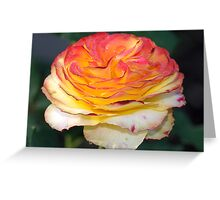 Not Just Another Tequila Sunrise Rose Greeting Card
