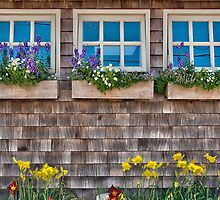 Windows with flowers by LudaNayvelt