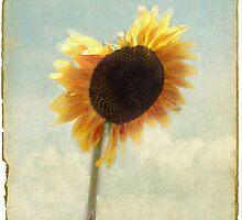 A Sunflower Grows by Rozalia Toth