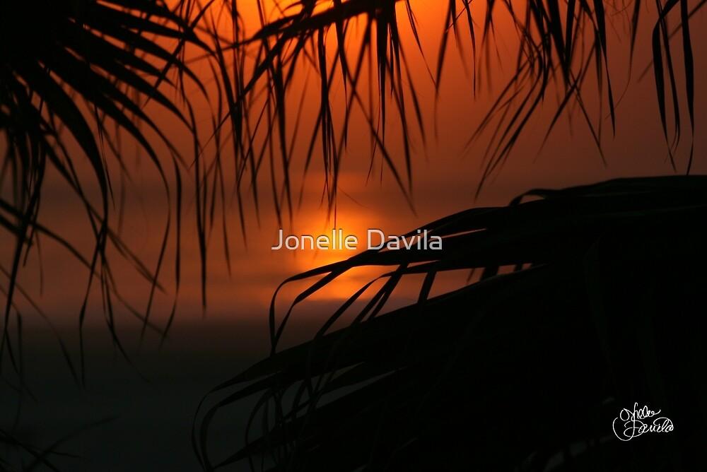 Palms by Jonelle Davila