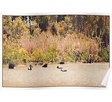 Afternoon light on Cussen Lake Poster