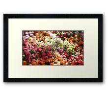 Beacon Hill Park Garden Framed Print