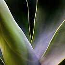 Green Agave by Robyn Carter