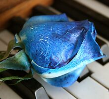 Blue Rose by Jonelle Davila