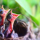 birdie duet by lensbaby