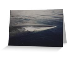 Whale rescue  Greeting Card