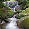 Leura Cascades by Michael John