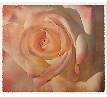 Rose to the occasion  Photographic Print
