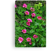 colourful weeds Canvas Print