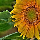 Sunflower. by Aler