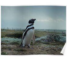Señor Pingüino Poster